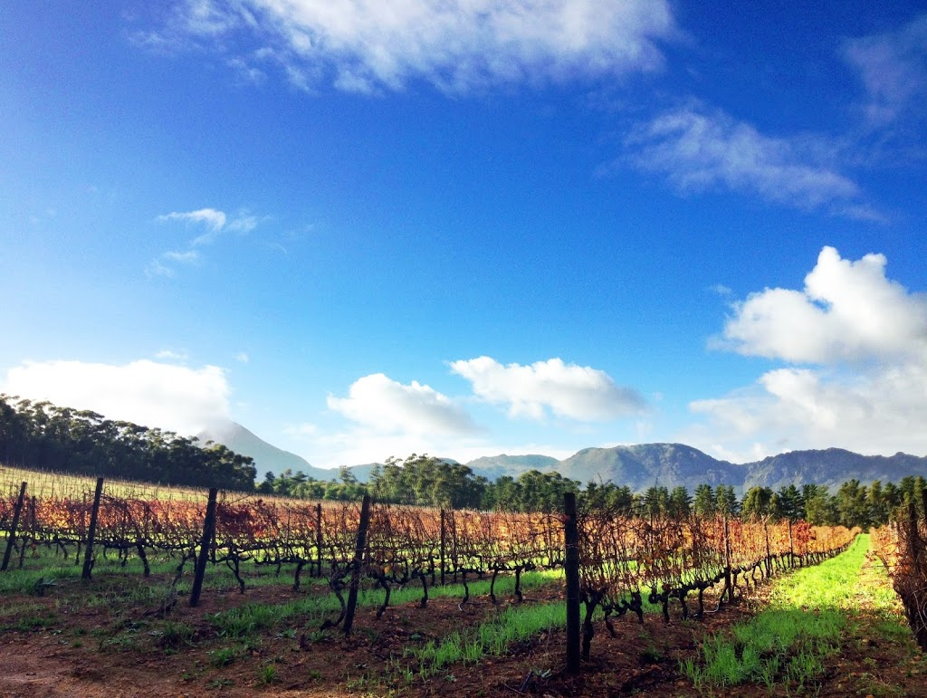 #DiscoverHelderberg: Things to do in the Helderberg