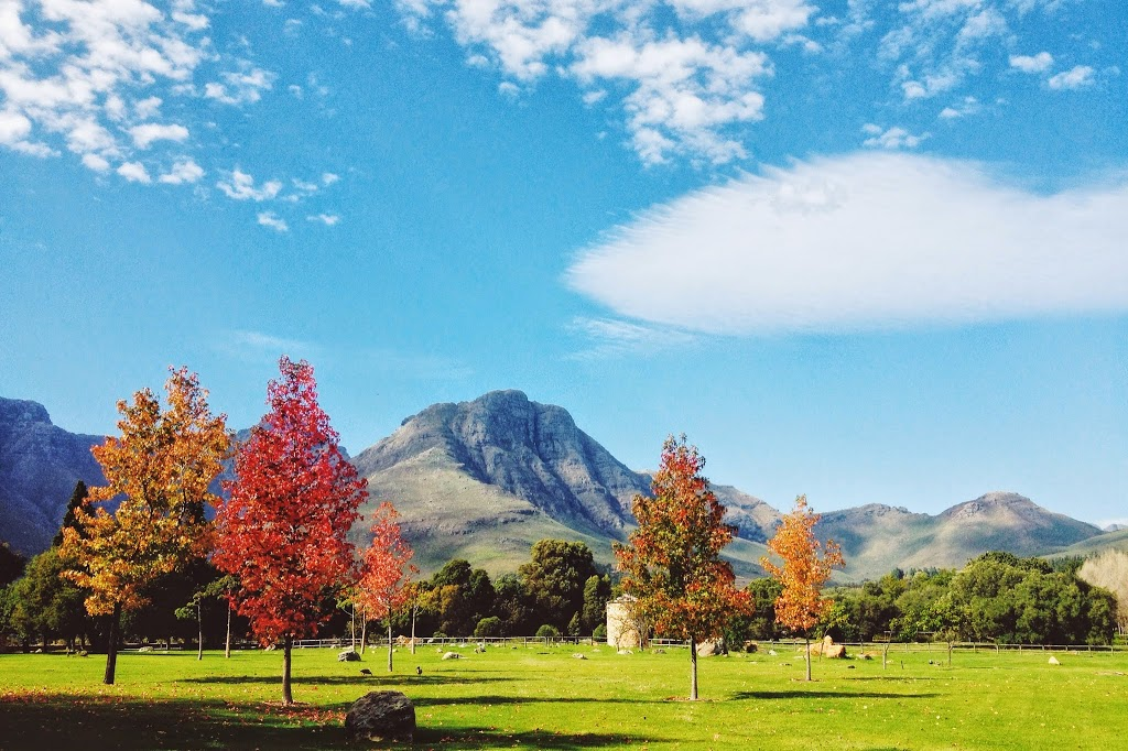 10 Things To Do In Stellenbosch (other than food and wine)