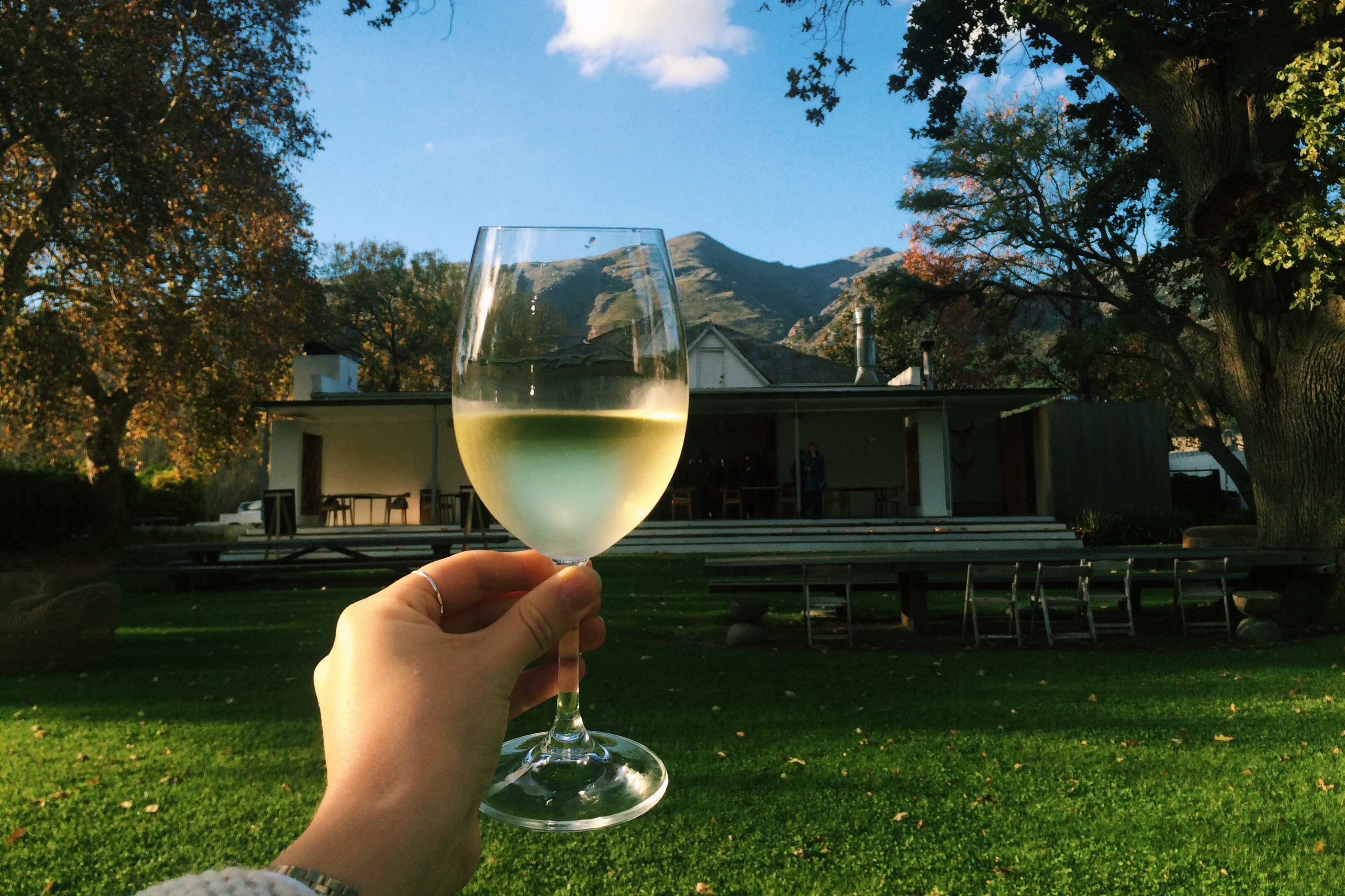 A guide to my favourite South African Chardonnays